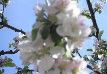 Foto-video_244-360x250.jpg